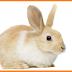 انشأ للأرانب مزرعة وأكسب أرباحاً هائلة !!!!