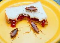 que-comen-las-cucarachas