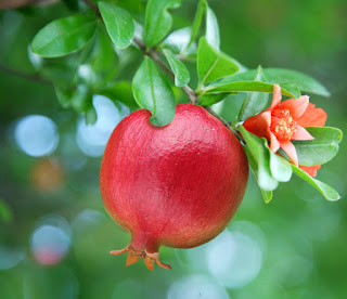 Health Benefits of Red Pomegranate - 2