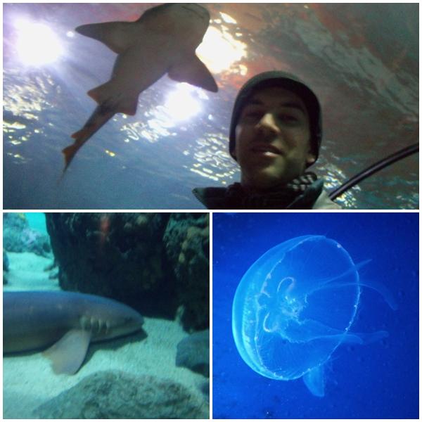 Oceanium, no Rotterdam Zoo - novocaroneiro.com