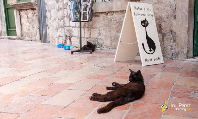 Gatos de Kotor en la calle