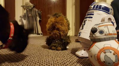 Droids chewie cat