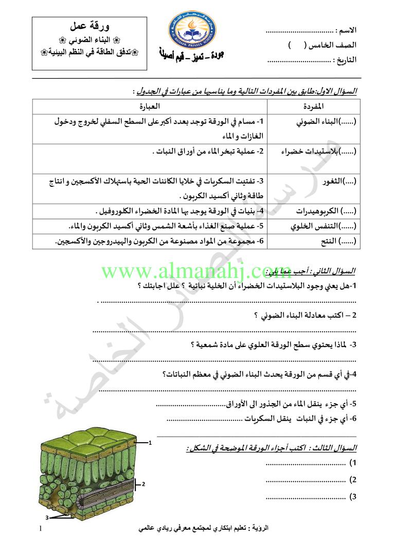 ورقة عمل البناء الضوئي الصف الخامس علوم الفصل الأول 2018 2019 المناهج الإماراتية