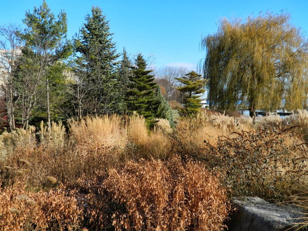 Toronto Music Garden perennials winter structure  Courante section by garden muses-a Toronto gardening blog
