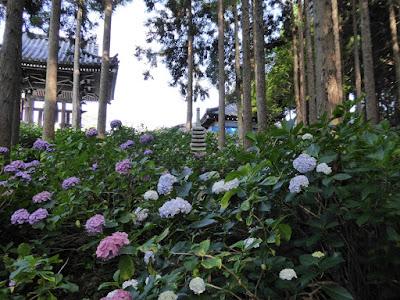 長尾の寺・正俊寺の紫陽花庭園 石塔