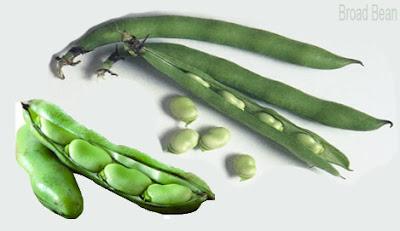 Broad bean; فول; 蚕豆; Fève; Saubohne; बाकला; Kacang lebar; Fava; 広大; Бобы; Haba; Bakla