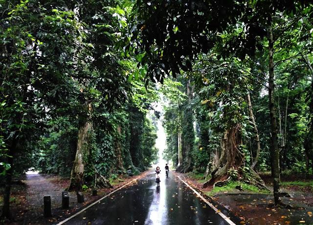 fhoto kebun raya Bogor