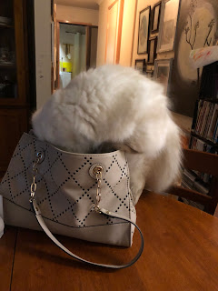 Image: sealpoint ragdoll kitten with head and all paws in a handbag.