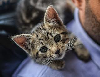 asuransi kucing