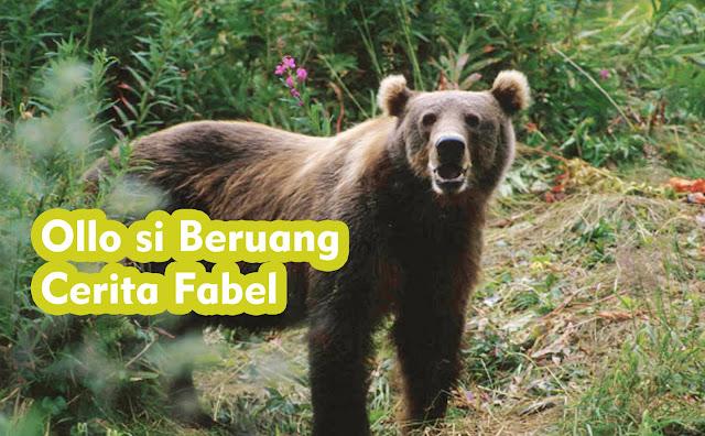 Ollo si Beruang