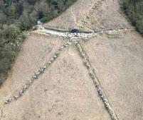 白い大文字で東日本大震災の犠牲者を追悼
