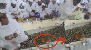 Heboh! Kucing Bersabar Tunggu Buka Puasa di Masjidil Haram