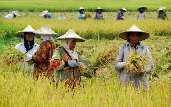 Praktik Neoliberalisme di Indonesia dan Dampaknya Terhadap Petani