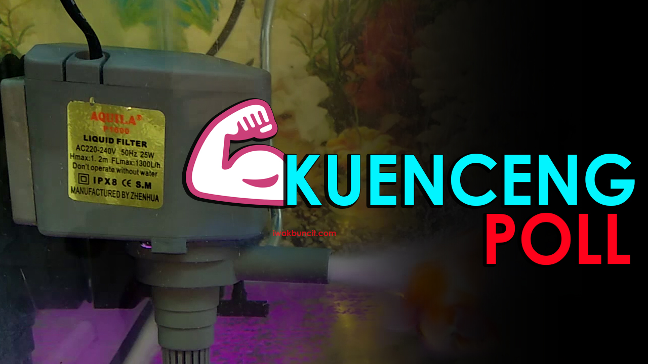 Review Pompa Celup Aquarium Aquila P1600: Seberapa Kenceng ...