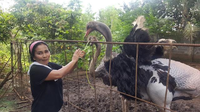 Dacara Farm Visit