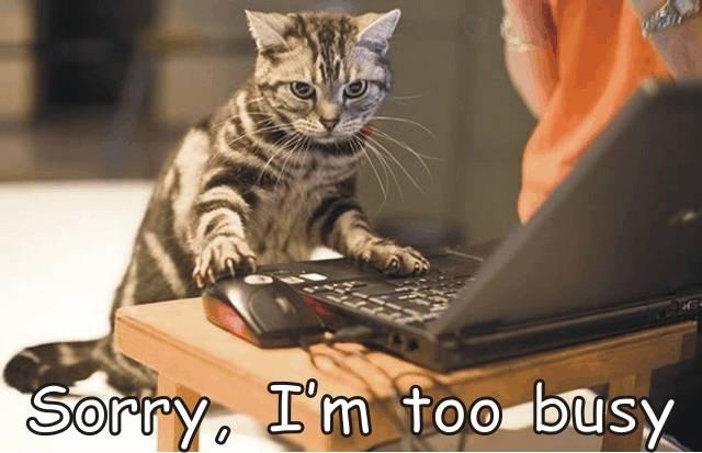 cat behavior problems
