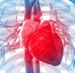 Manfaat Mengonsumsi Kangkung dan Bayam Bagi Penderita Jantung Lemah