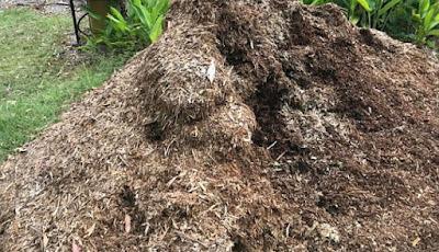 Gundukan daun kering yang berbahaya