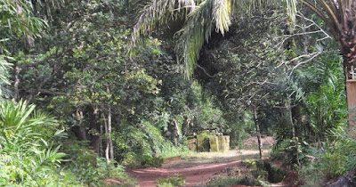 Six-Month-Old Baby Found In Idemili Forest, Anambra