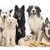 Encontre adestradores de Cães em BH, Nova Lima e região