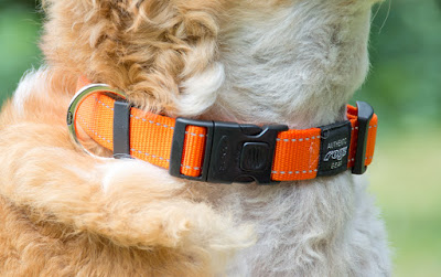 locking buckle dog collar