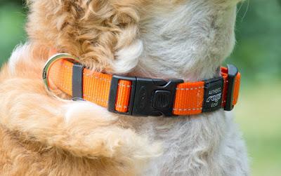 locking buckle dog collar