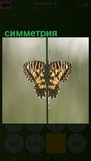 симметрия бабочки, одинаковые крылья с двух сторон