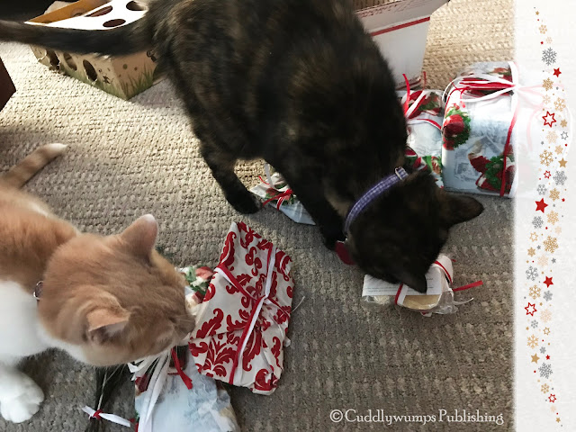 Real Cats Paisley & Webster check out their Secret Paws presents