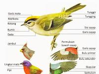 Ciri dan Struktur Morfologi (Topografi) Kelas Aves, LENGKAP