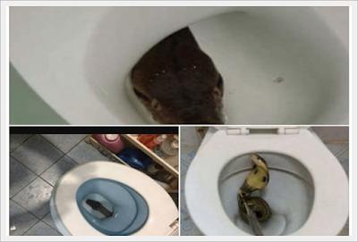 http://cnmbvc.blogspot.com/2016/11/siram-toilet-anda-sebanyak-banyaknya.html