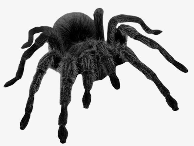 رؤية حلم العنكبوت الأسود في المنام 2018
