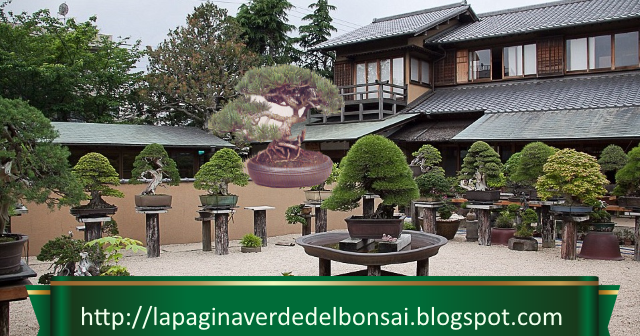 2018 Top 10: Our Most Popular Posts Of The Year | The Ancient Art Of Bonsai.
