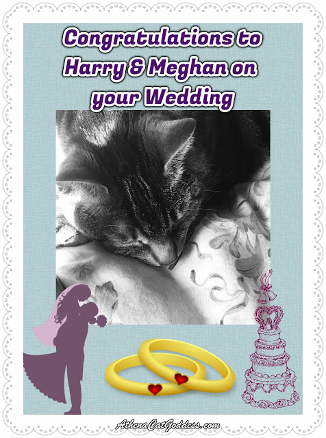 Caturday Art: Royal Wedding