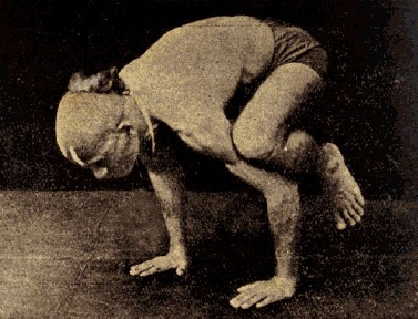 conciencia yoga sri t krishnamacharya asanas
