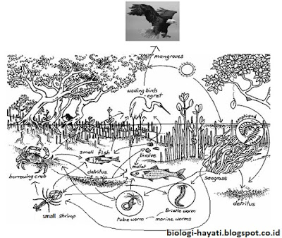 Jaring-jaring Makanan pada Ekosistem Mangrove