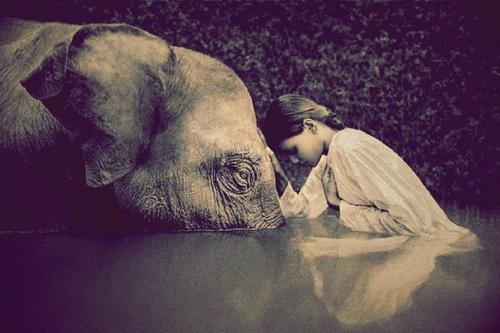 Soñar con Elefantes ¿Que significa?
