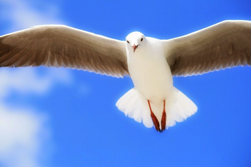 Morgan's Milieu | A Writing Exercise - The Process: A seagull in flight in a clear blue sky.