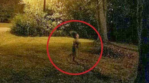 """Extraña """"criatura"""" es fotografiada corriendo por un jardín por la noche"""