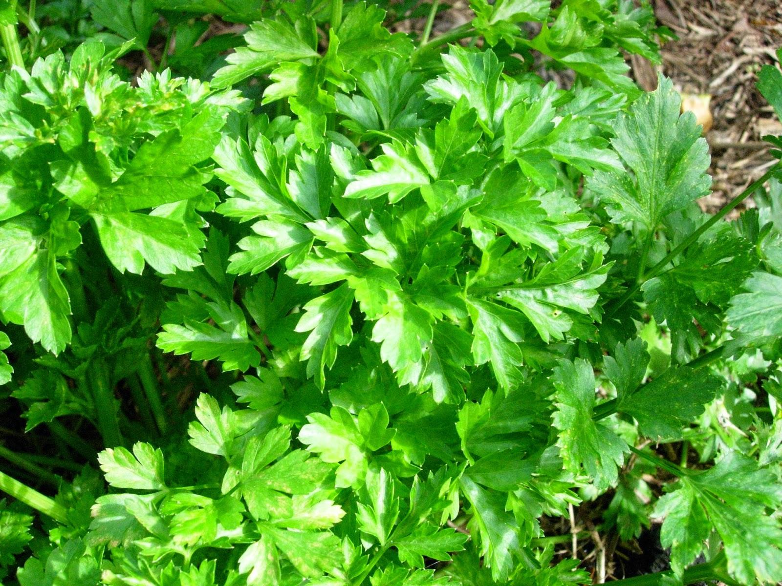 foto:giardinaggio.net