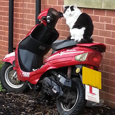 A black and white cat sits on the seat of a parked red motorbike, looking defiant