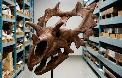 nueva especie de dinosaurio