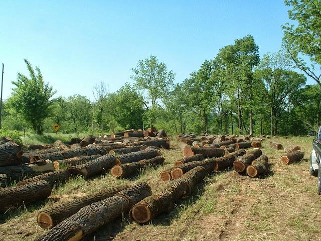Explotación forestal actividad agrícola y primaria