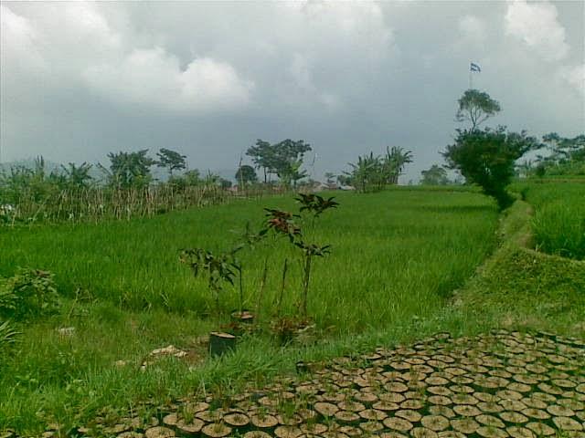 Foto(4991) Jual Tanah Milik Dekat Puncak Luas 24.000 m2 / 2,4 Ha jual tanah di kota bunga jual tanah di puncak jual tanah di taman bunga nusantara