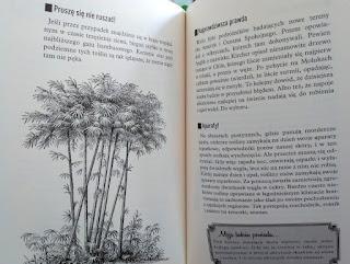 Przykładowe strony książki