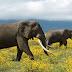 Vitu 10 Amazing kuhusu Tanzania.