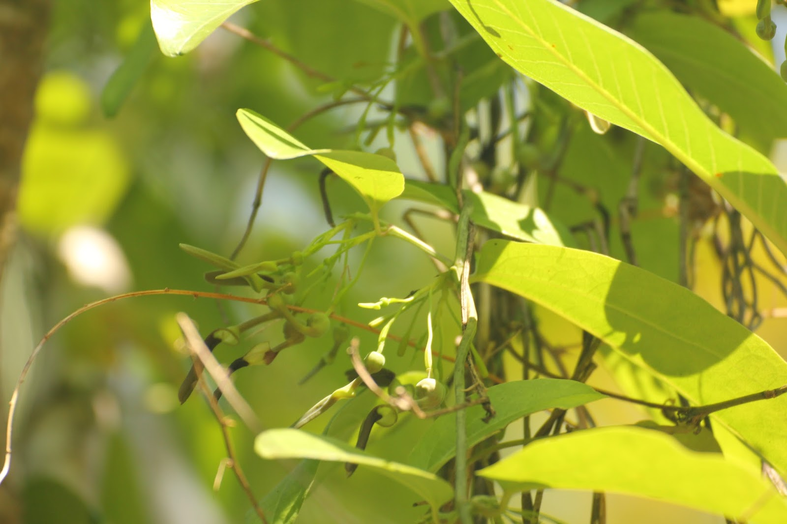 Butterfly Garden Plant | The Urban Gardener