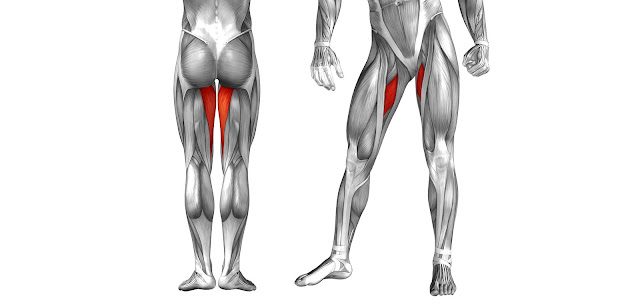 Приводящие мышцы бедра (аддукторы)
