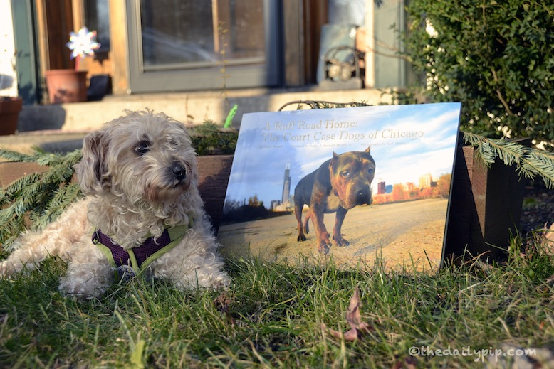 Ruby reviews a Ruff Road Home: The Court Case Dogs of Chicago