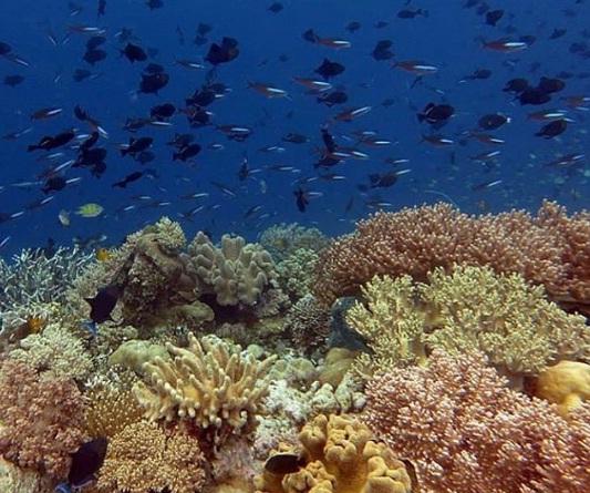 pulau tomia wisata kendari