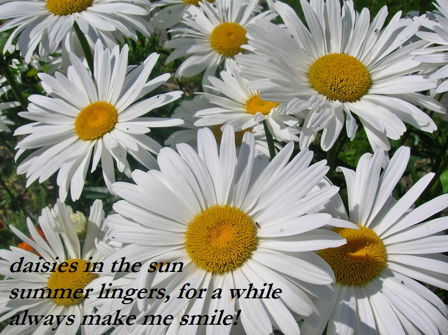 haiku poems about flowers - photo #14